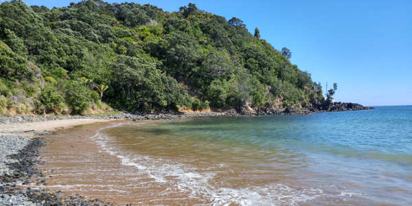 Little Bay Coromandel