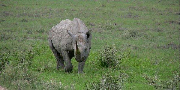 Nashorn im Etosha Nationalpark Namibias