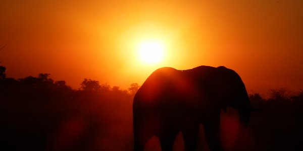 Sonnenuntergang mit Elefant in Namibia