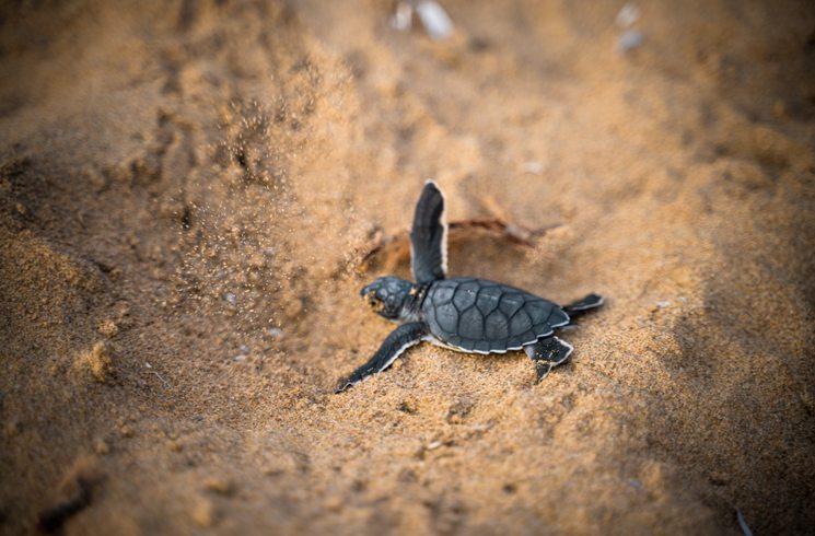 Schildkröte auf Zypern