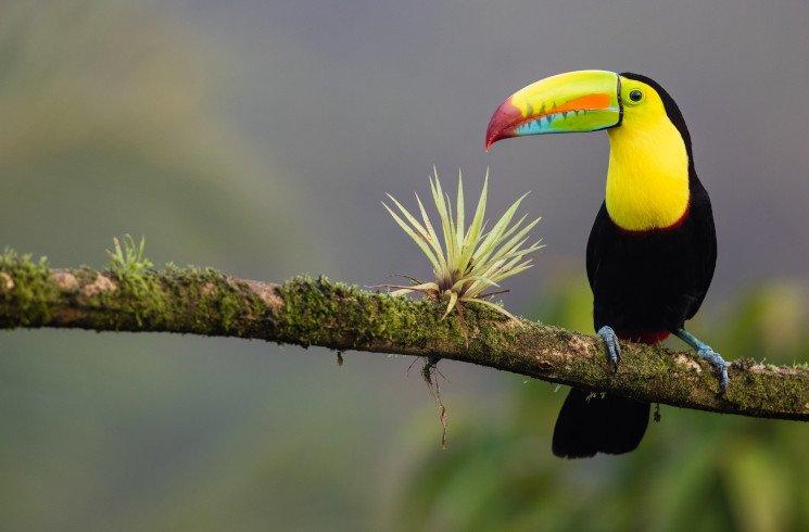 Arbeiten in Costa Rica