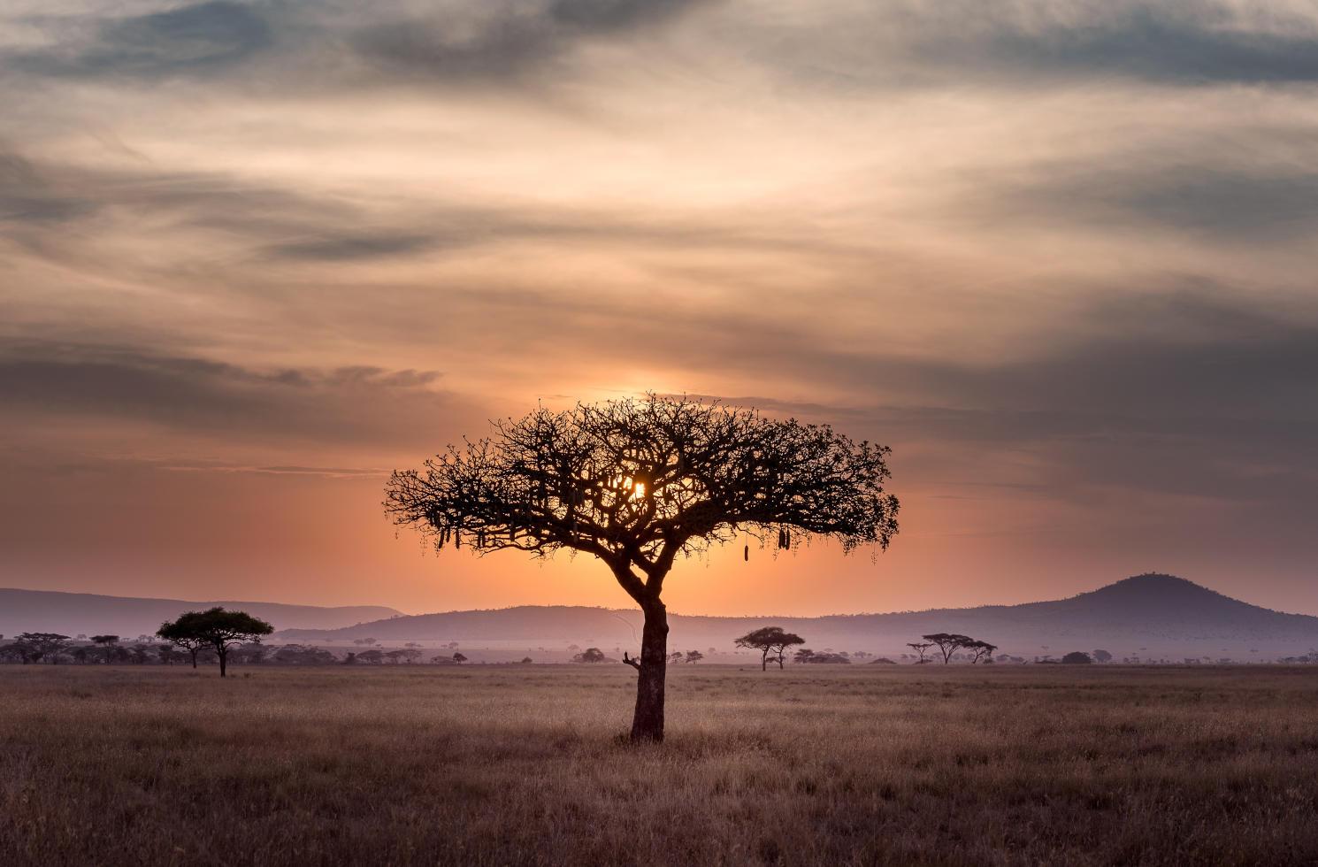 Jobsuche & Arbeiten in Kenia