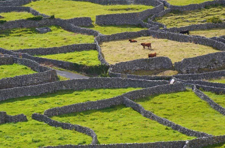 Praktikum in Irland