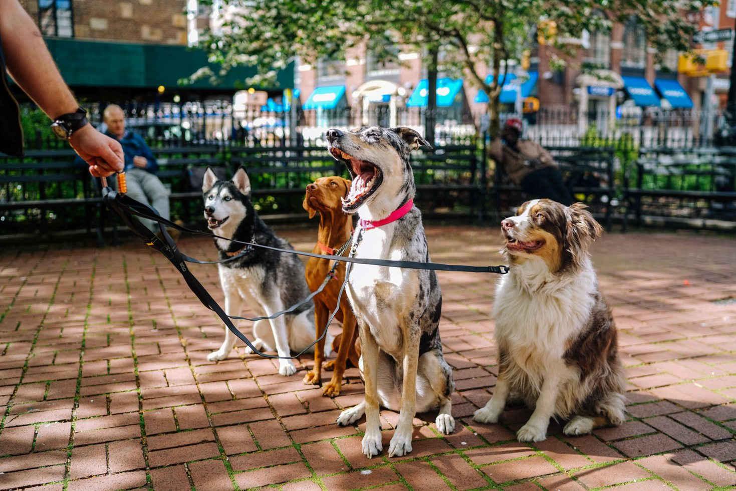 Mit Hunden Gassi gehen