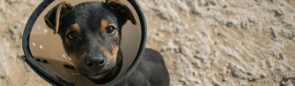 Hundewelpe mit Halskrause