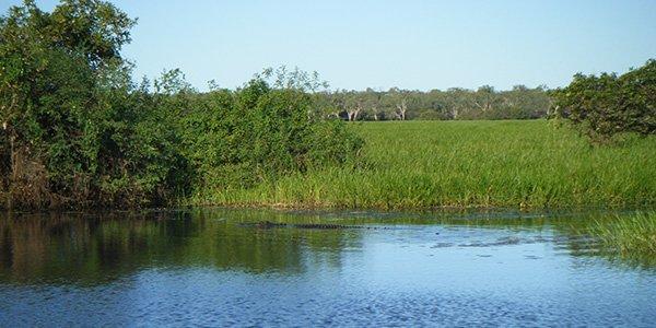Krokodil im Wasser des Kakadu-Nationalparks in Australien