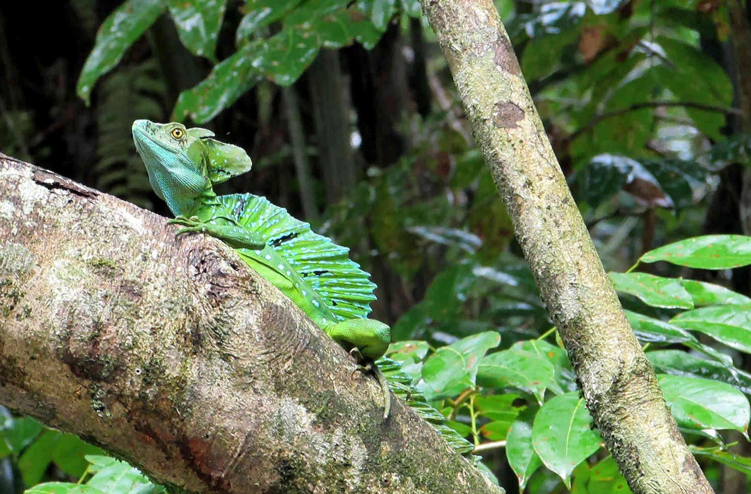 Tortuguero, Limón Province in Costa Rica
