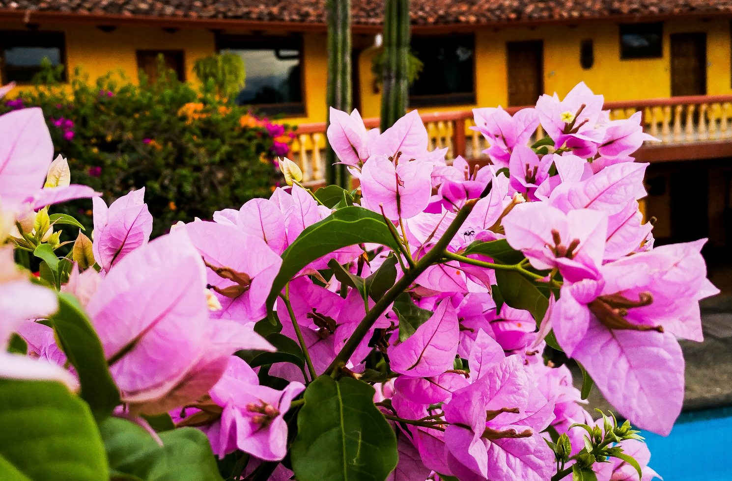 Blumen in Costa Rica
