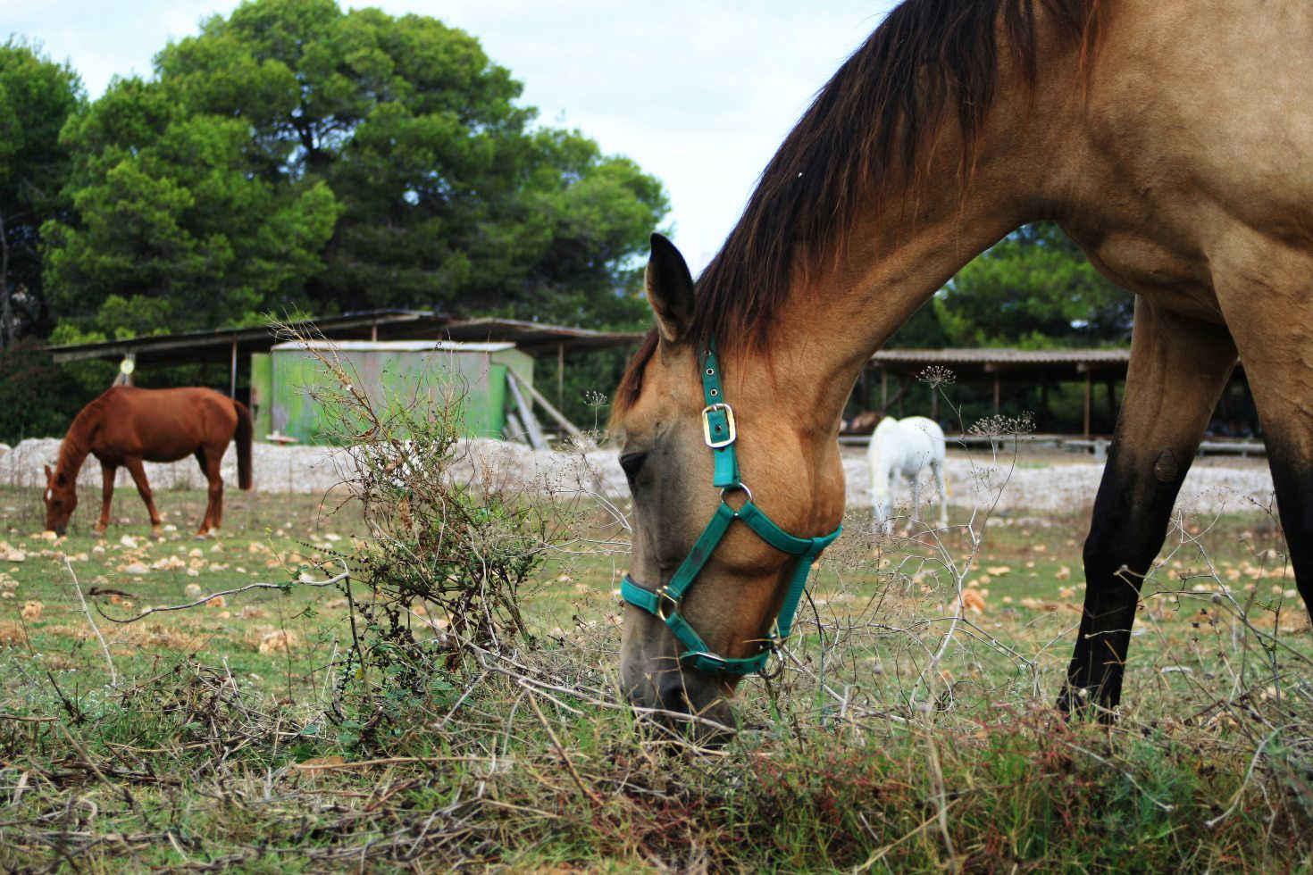 Pferd auf Mallorca