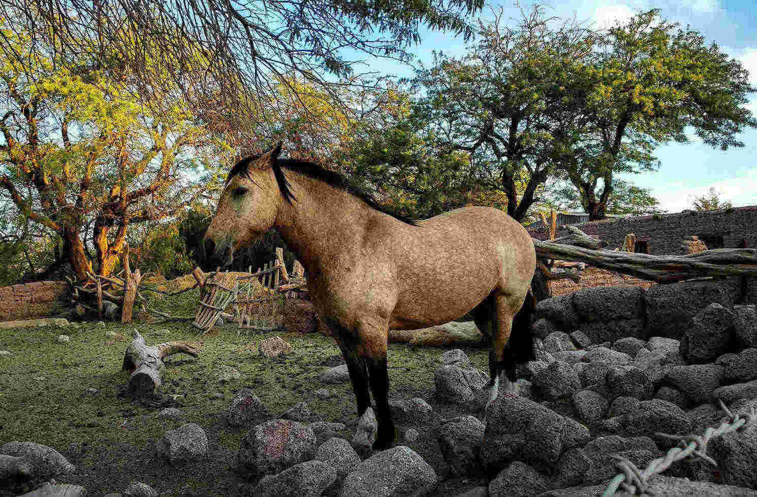 Pferd in Chile