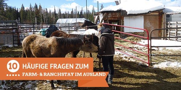 Junge Frau versorgt Pferde in einem Paddock