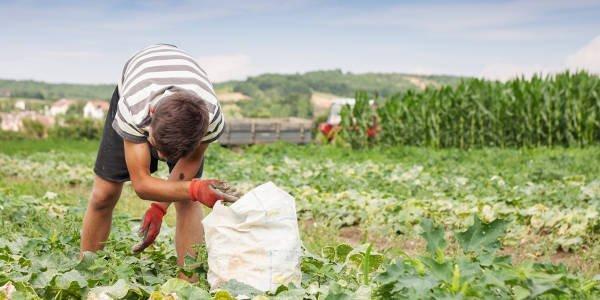 Junger Mann arbeitet auf einem Feld