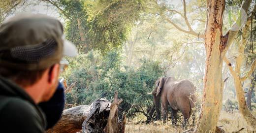 Safari Guide Kurs in Südafrika/Botswana