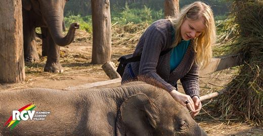 Praktikum in Nepal mit Elefanten
