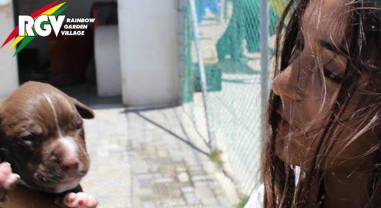 Praktikum in Nepal im Bereich Tierschutz