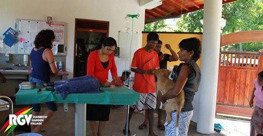 Praktikum in Sri Lanka in einer Hundeklinik