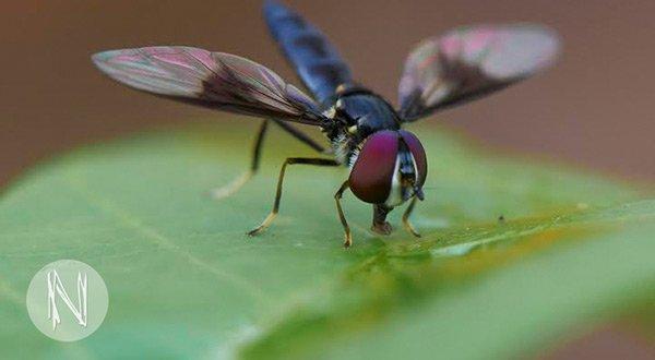 Praktikum in Peru: Forschungsprojekt mit Insekten