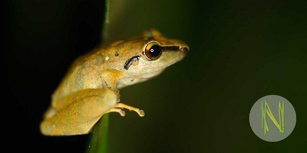 Praktikum in Peru: Forschungsprojekt mit Reptilien und Amphibien