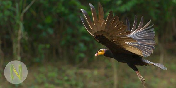 Praktikum in Peru: Forschungsprojekt mit Vögeln