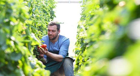 Praktikum in den USA: Obstbau (Landwirtschaft)