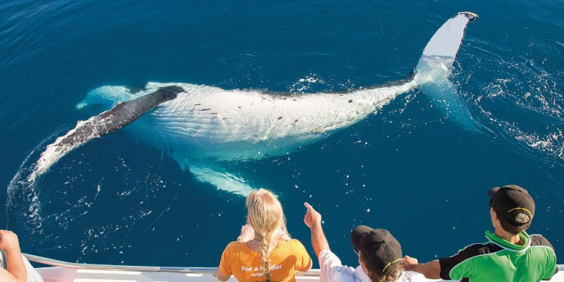 Whale Watching Fraser Coast