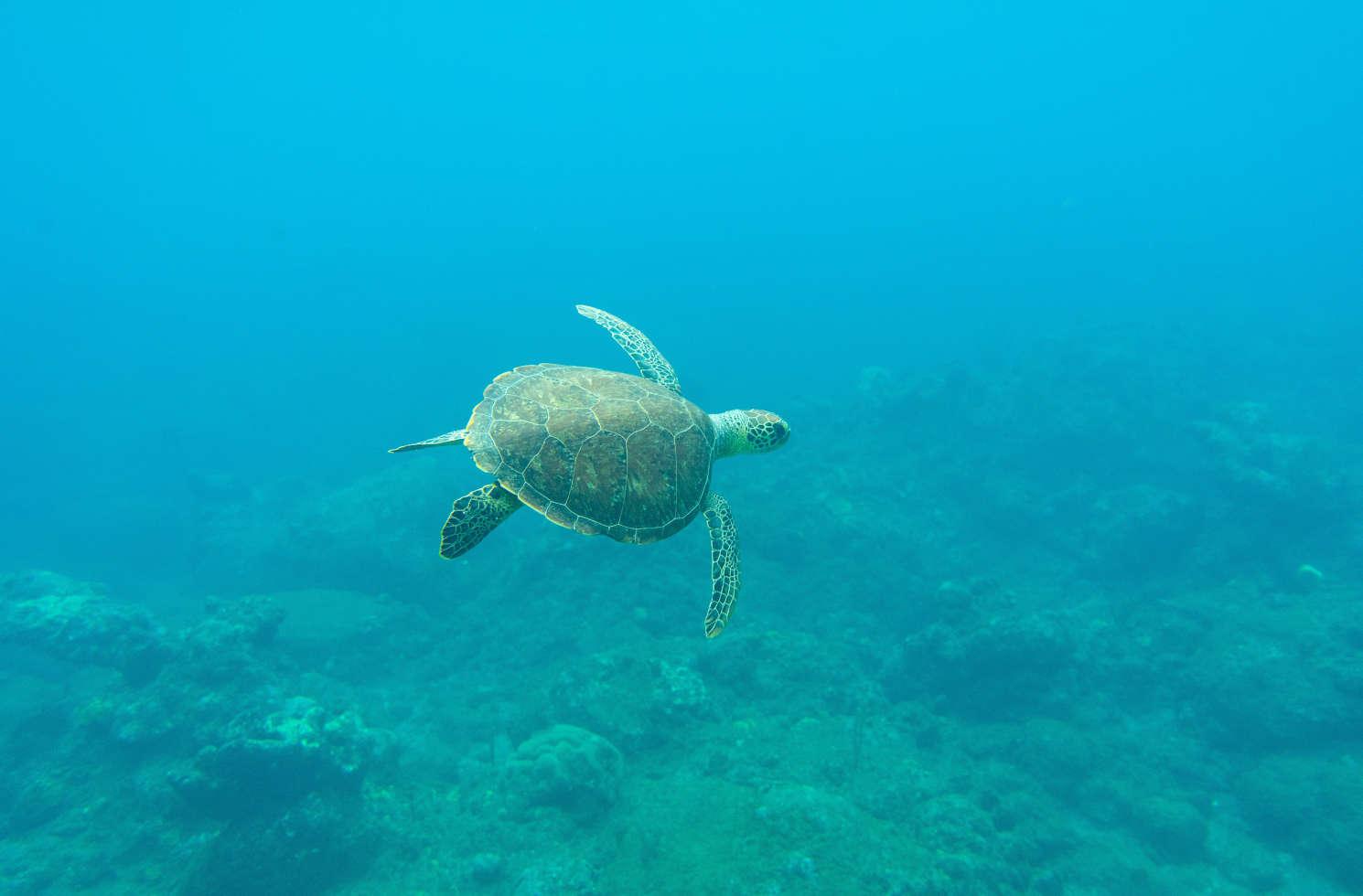 Praktikum in der Karibik im Bereich Klimaschutz