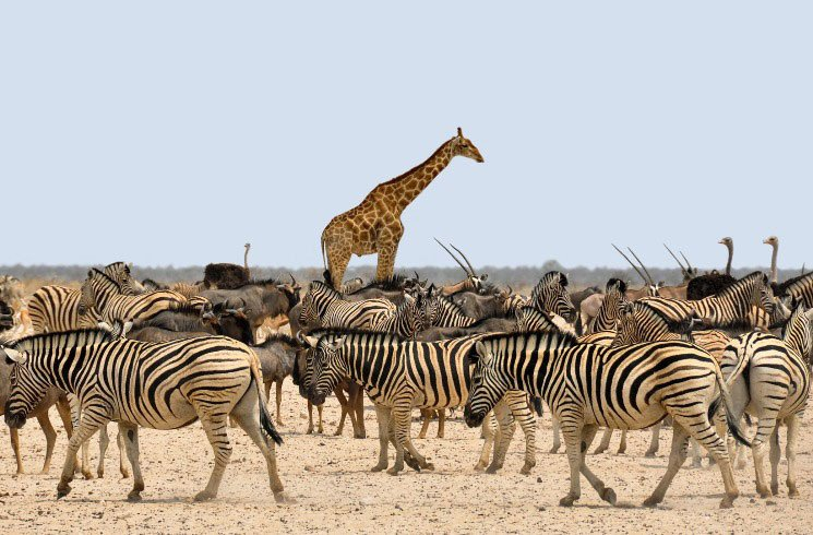 Wildtiere in Namibia: Zebra, Giraffe, Antilope, Strauß
