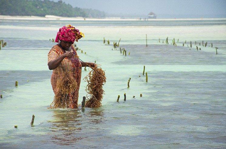 Fischerei auf Sansibar