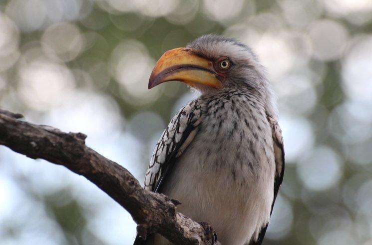 Vogel in Südafrika