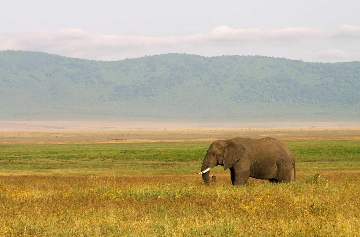 Praktikum in Tansania