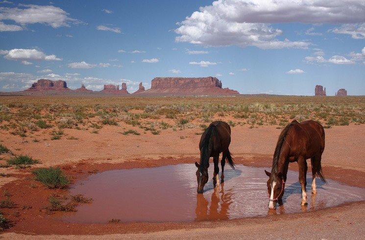 Pferde in der Wüste von Arizona, USA
