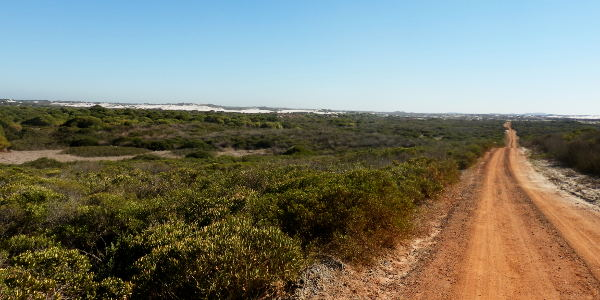 Südafrikanische Wildnis im Koeberg Nature Reserve Kapstadt