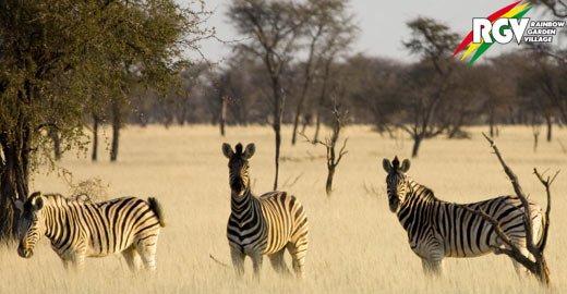 Praktikum in Namibia im Bereich Tourismus