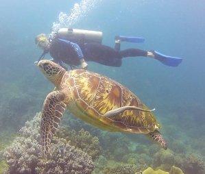 travelicia-apo-island-philippinen
