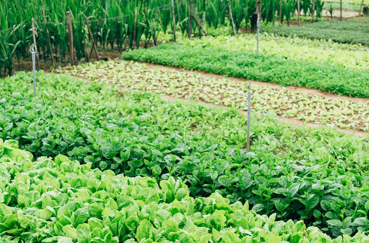 Praktikum in den USA: Ökologische Landwirtschaft