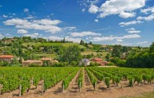 Work and Travel in Europa | Weinbaugebiet in Bozen