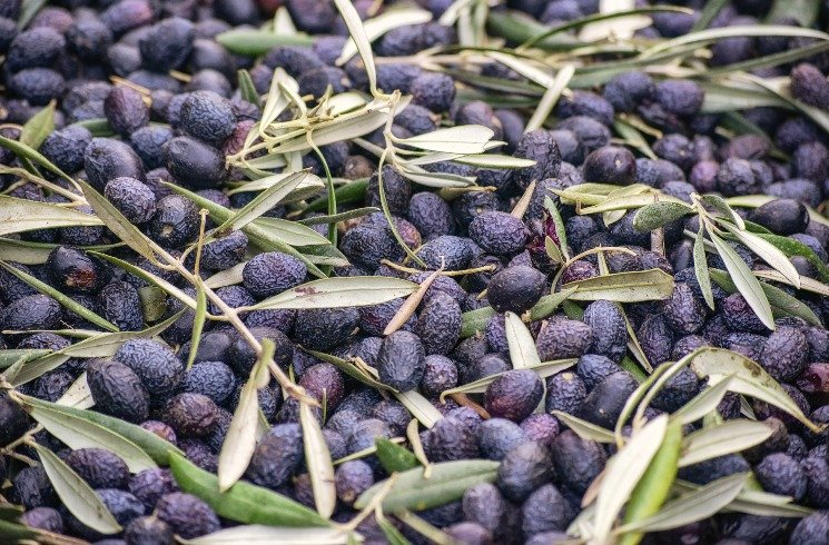 Griechische Oliven