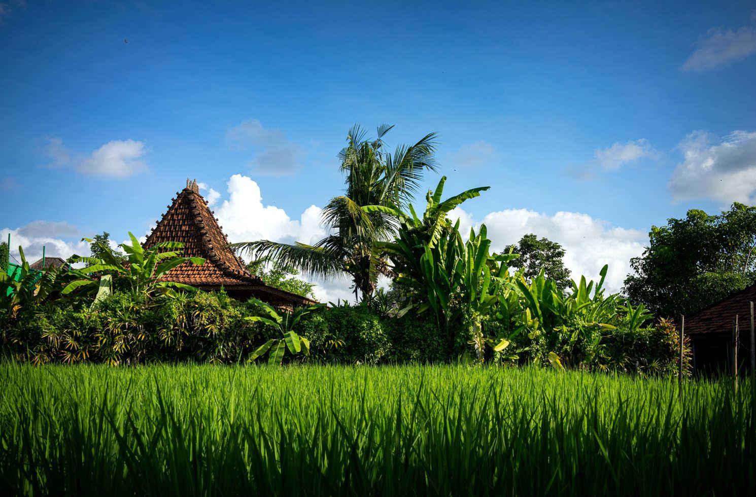 Jalan Penestanan Kelod, Sayan, Ubud, Gianyar, Bali, Indonesien