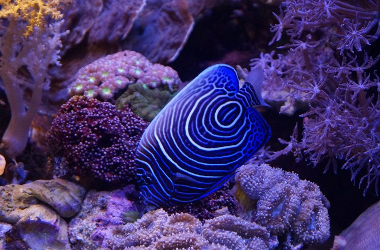 Korallenriff in Israel