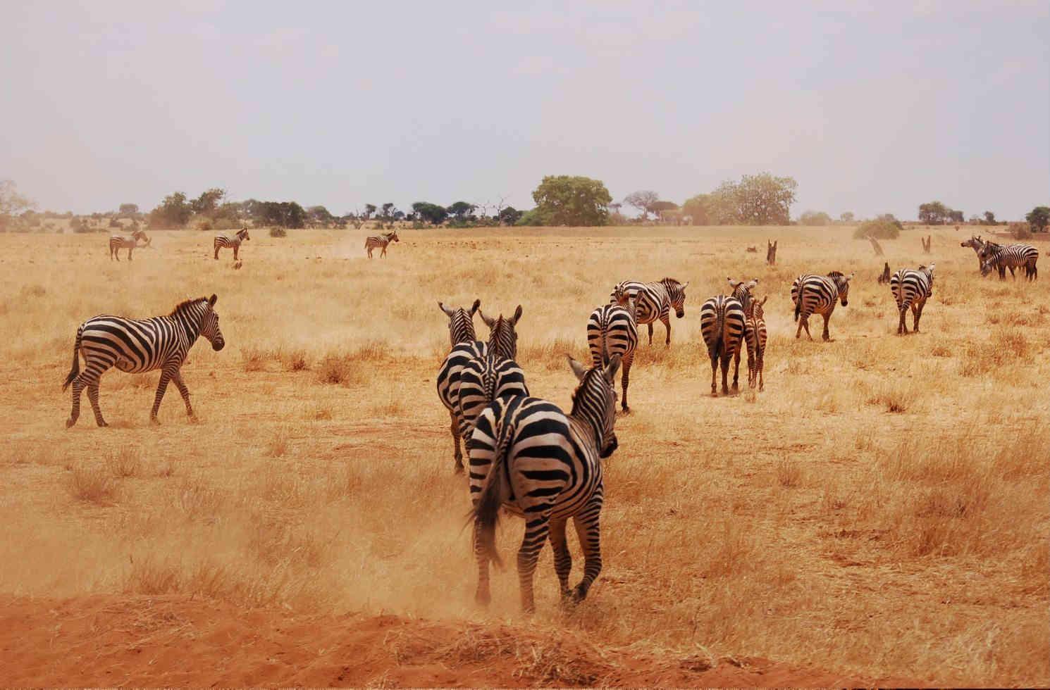 Tsavo National Park in Kenia