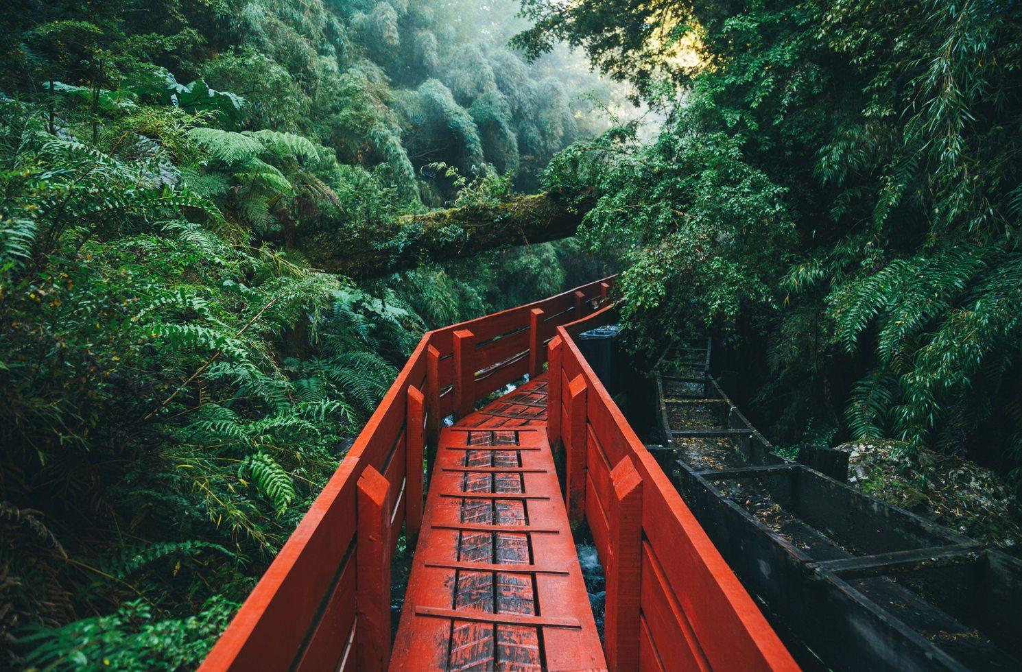 Regenwald in Termas Geométricas, Coñaripe, Panguipulli, Chile