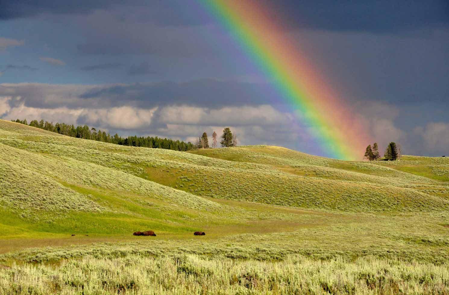 """Freiwilligendienst im """"Yellowstone National Park"""""""